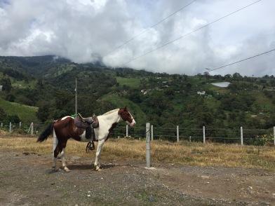 Turrialba horse back riding