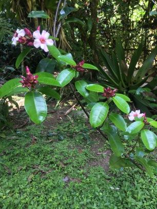 Costa Rica Gardens Caribbean coast