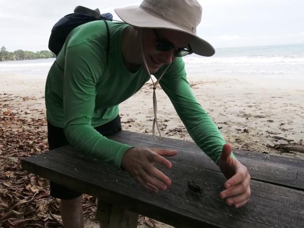Cahuita National Park - grasshopper